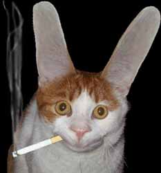 smoking-cat-big-ears2.jpg